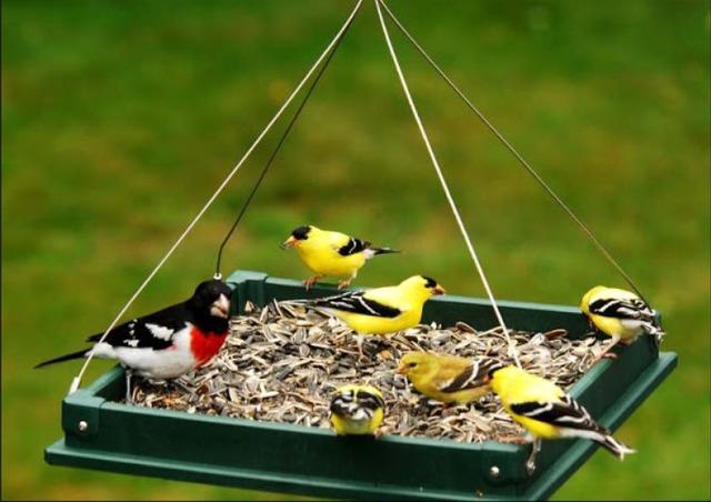 идеи птичьих кормушек фото,