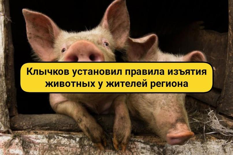 Клычков установил правила изъятия животных у жителей региона