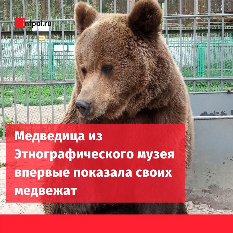 Вжизни «Этнозоосада» произошло знаменательное событие. Наконец-то, медведиха Се...