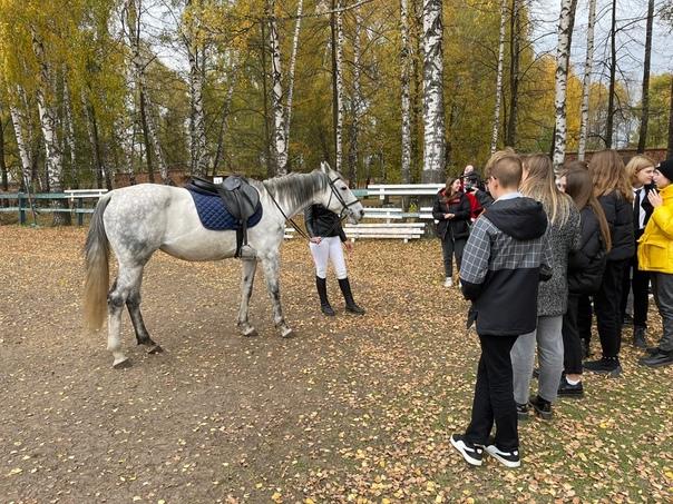 ✅ Новомосковске волонтеры взяли на попечение лошад...