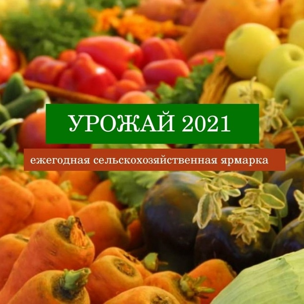 С 15 сентября по 31 октября в Бузулуке будет работать сез...