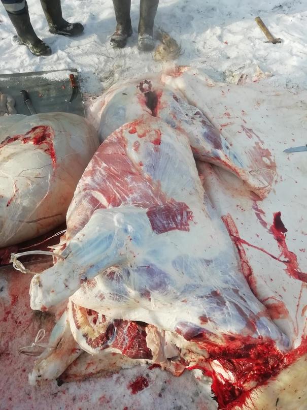 Принимаю заказы на мясо говядина | Объявления Орска и Новотроицка №23828