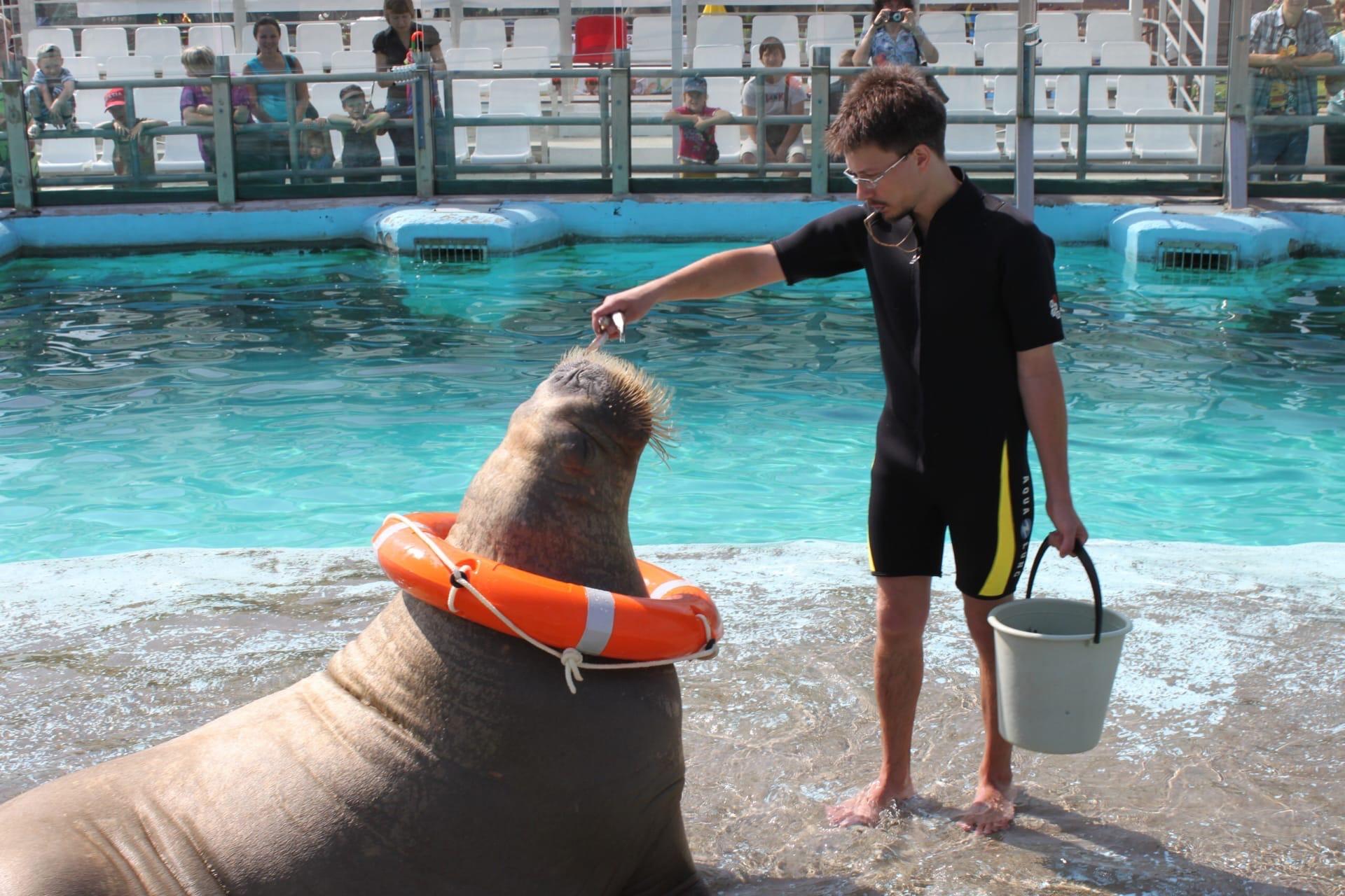 Помните мы писали о том, что моржи