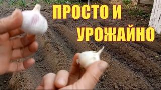 Посадка ЯРОВОГО ЧЕСНОКА по-деревенски