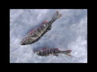 Карелия. Без рыбалки и жизнь не уха!