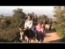 سيده تركب الحمار والعجوز تمشي في ايجي ponyboy