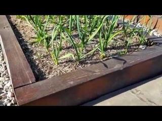 ОГОРОД на склоне: майские ПЕРЕДЕЛКИ в саду.