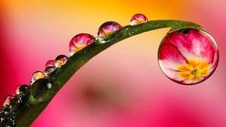 Музыка для медитации. Красивое видео цветения цветов (Beautiful flowers) !