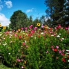 Цветущий сад. Дача. Огород.