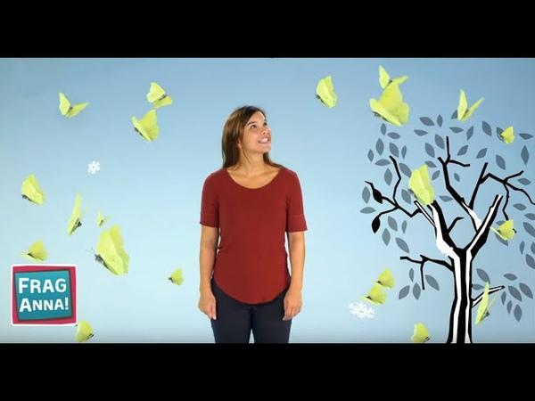 Kinder fragen Anna antwortet Schmetterling Wasserschwein Rabe Frag Anna