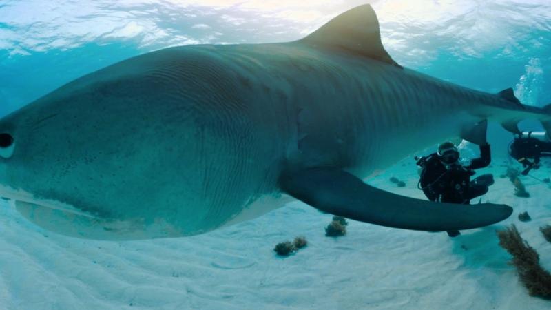 Nadar con tiburones 360° Nat Geo