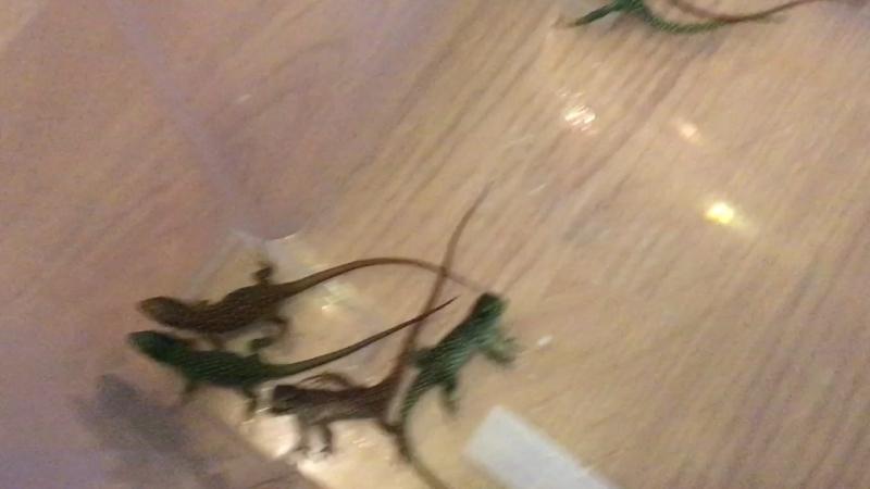 Land of lizards Маленькие злобные жемчуженки😈