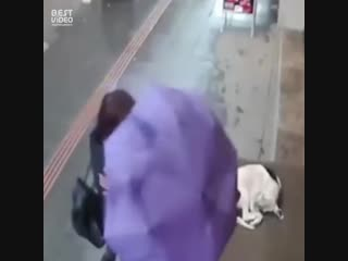 Девушка отдала псу свой шарф
