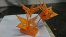 Hướng dẫn tỉa con bướm từ cà rốt - Cú Đêm