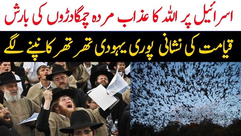 Bani Israel Per Allah Ka Azab Nazil Chamgadaron Ki Barish Qayamat Ki Nishani Limelight Studio