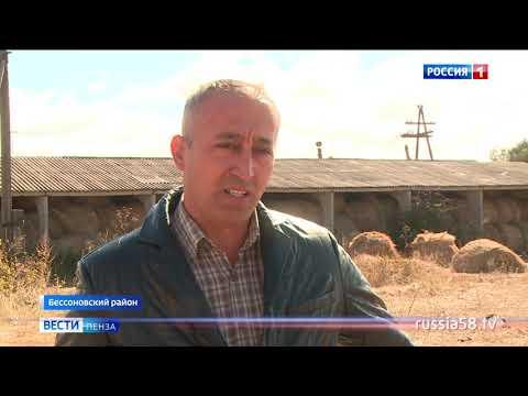 Фермер из Бессоновки выиграл 4,5 млн. рублей на развитие мясного скотоводства