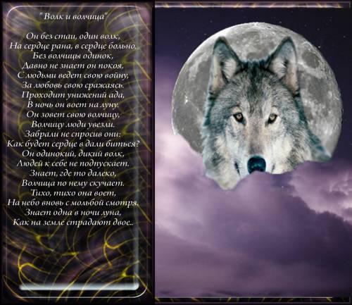 Большое фото с волком и стихами