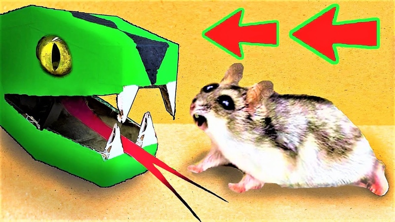 🐹🐍Snake Hamster Maze with Traps 😱[OBSTACLE COURSE]😱 BONUS